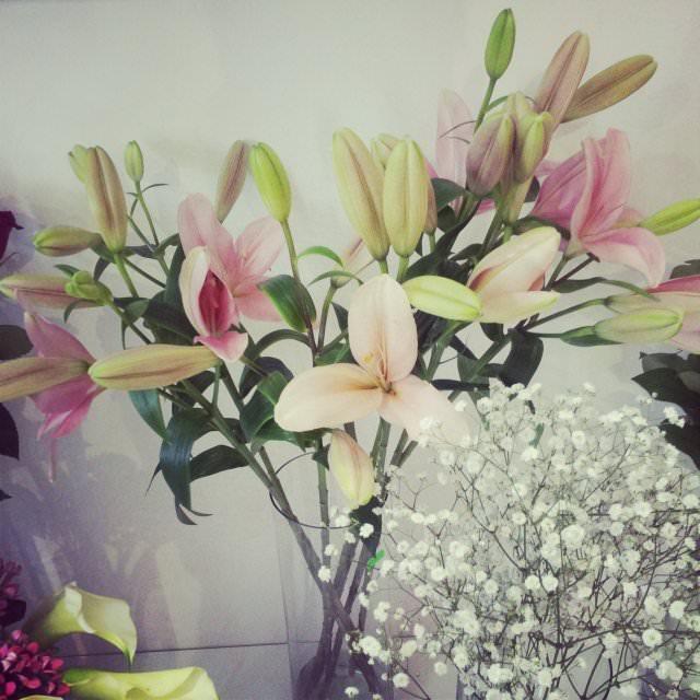 floraria florista (5)