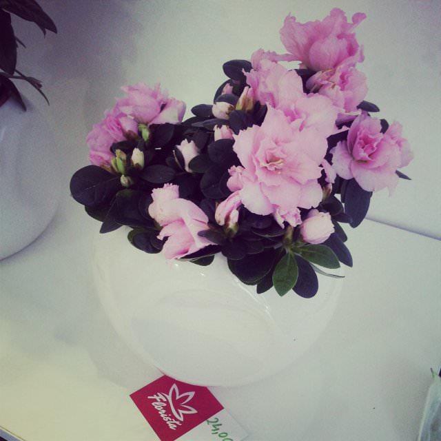 floraria florista (9)