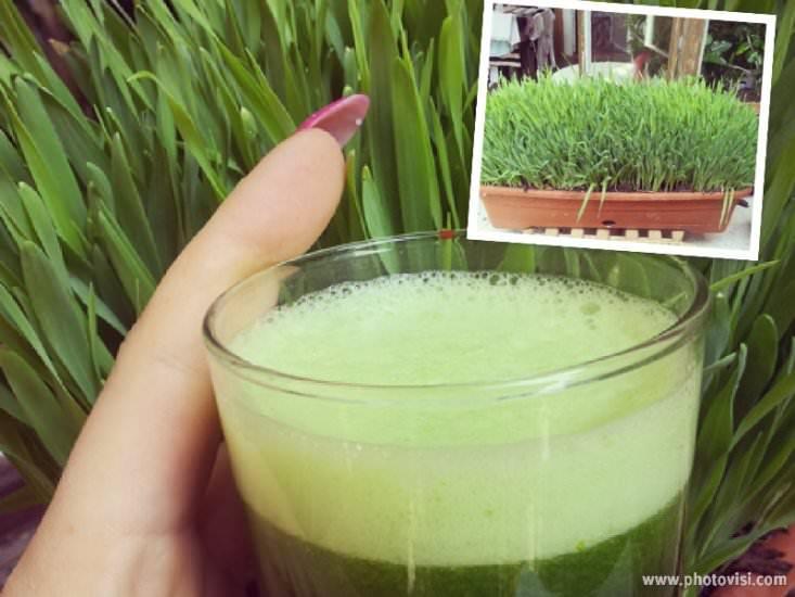 suc de orz verde